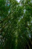 Paris Frankrike Juni 1, 2015: Berömda trädgårdar för värld av Versaille med dess magnificient gröna ordningar Royaltyfria Bilder
