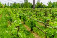 Paris Frankrike - Juni 1, 2015: Queens Hamlet, Versailles, härliga trädgårdar med grön vegetation, floder och sjöar Royaltyfria Foton