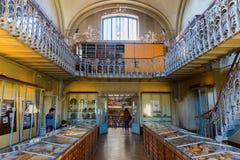 Paris Frankrike - Oktober 16, 2016: Galleri av Palaeontology och komparativanatomi i Paris, med oidentifierat folk Är en delnolla royaltyfria bilder