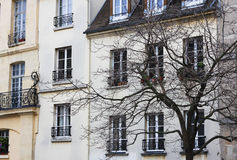 A Paris house and a black tree silhouette royalty free stock image