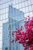Paris La Defense with spring tree in France Royalty Free Stock Image