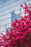 Paris La Defense with spring tree in France Royalty Free Stock Images