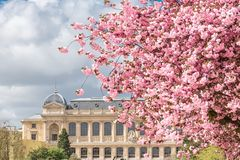 Paris, le Jardin des Plantes photographie stock libre de droits