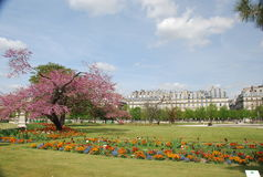 Paris - les tuileries Royalty Free Stock Photos