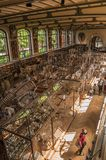 Backbone skeleton of marine mammals in the Gallery of Paleontology and Comparative Anatomy at Paris. Paris, northern France - July 10, 2017. Skeletons of royalty free stock images