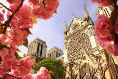 Paris, Notre Dame cathedral with blossomed tree Stock Image