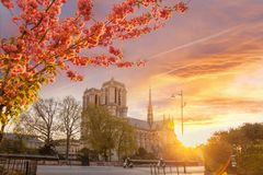 Paris, Notre Dame cathedral with blossomed treeagainst colorful sunrise in France Royalty Free Stock Images