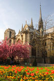 Paris, Notre Dame cathedral in spring time Stock Photos