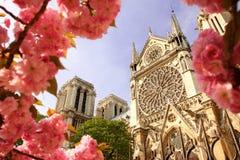 Paris, Notre- Damekathedrale mit geblühtem Baum Stockbild