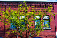 Paris Ontario. A tree grows in front of the windows of an old red building in downtown Paris Ontario Canada Stock Image