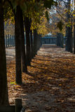 Paris park. Nice park in paris with trees in autumn Royalty Free Stock Image