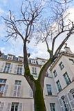 Paris - Place de Fustemberg Stock Photos