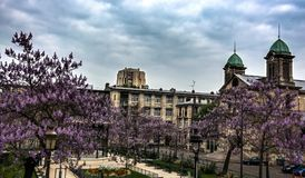 Paris spring bloom HDR. Paris spring bloom and ancient buildings HDR Stock Image