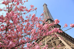 Paris, France - Eiffel Tower at spring. Eiffel tower at springtime in Paris, France. blossoming tree on the foreground, focus on blossom tree flowers, daylight Stock Photography