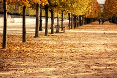 Paris in the time of dead leaves Royalty Free Stock Image
