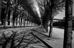 paris trees Royaltyfri Fotografi