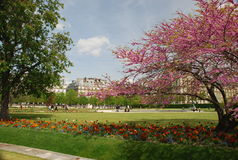 Paris - tuileries dos les Imagens de Stock