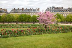 Paris Tuileries Spring Royalty Free Stock Photo