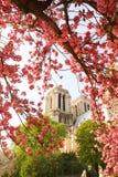 Paris, Zeit der Notre- Damekathedrale im Frühjahr Lizenzfreie Stockfotografie