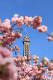 Parisian detail. Detail of the top of The Eiffel Tour seen through branches of blossoming tree in spring Royalty Free Stock Images
