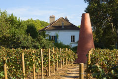 Parisian vineyard Stock Photo