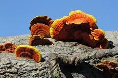 Parisite fungi Stock Image