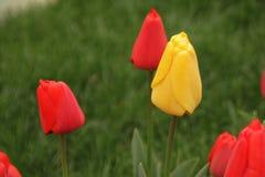 Parkı d'Ortaköy YILDIZ de saison de tulipe, photo libre de droits