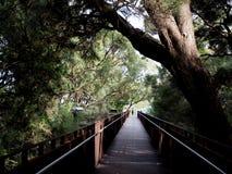 Park,珀斯,澳大利亚国王的木木板走道 库存照片
