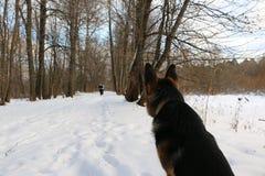 Park är full av snö och hund Royaltyfria Bilder