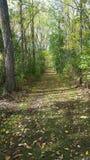 park ścieżki lasu arboretum schodów stone lato Zdjęcie Royalty Free