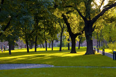 Park. Green park with light between the trees Royalty Free Stock Photo