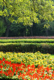 Park. Early autumn scenery in the park Royalty Free Stock Image