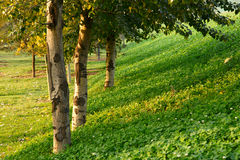 Park. The grass and trees in the park Royalty Free Stock Photography
