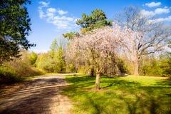 Park Royalty Free Stock Photo