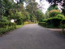 Park stock fotografie