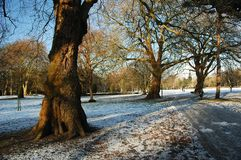 Park. Snowy cardiff park with tree and blue ski, horizontally framed picture stock photos