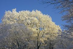 Park. Covered with hoarfrost and the trees illuminated by the sun Stock Photography