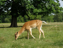 In park. Pleasant stay in Richmond Park Stock Photo