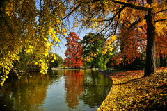 Park. A quiet place in autumn Royalty Free Stock Images