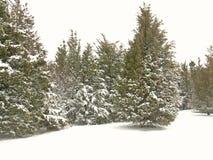 park 2 śnieg obraz royalty free