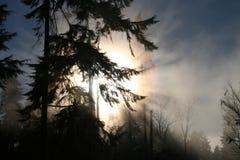 park 2 Stanley mgła. Fotografia Royalty Free