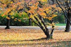 Park. Beautiful colorful fall foliage in autumn Stock Photos