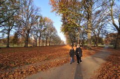 In the park. London, UK - 18 Nov, 2011 - Couple walking in the Buckingham Palace Gardens in autumn Royalty Free Stock Images