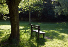 Park. Bench under the tree illuminated by sunlight Royalty Free Stock Photos