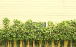 Park. Natural bamboo and wall decoration in background or texture Royalty Free Stock Images