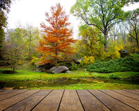 Park. Wood textured backgrounds in a room interior on the autumn forest backgrounds Royalty Free Stock Images