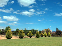 Park. A picture of a field in a park next to rows of neatly planted trees Royalty Free Stock Photos