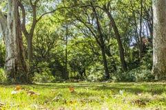 park 2 Royaltyfria Foton