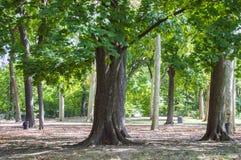 1 park Fotografering för Bildbyråer