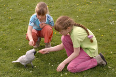 In the park. Children with cockatoo in the grass Royalty Free Stock Image